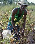 kbA-pěstitel